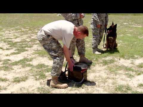 Starting Strong Season 2 - 31K Military Working Dog Handler