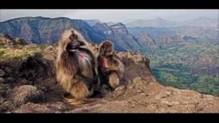 Endemic animal of Ethiopia documentary !!