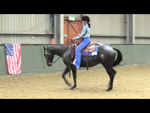 Appaloosa horse club uk nationals