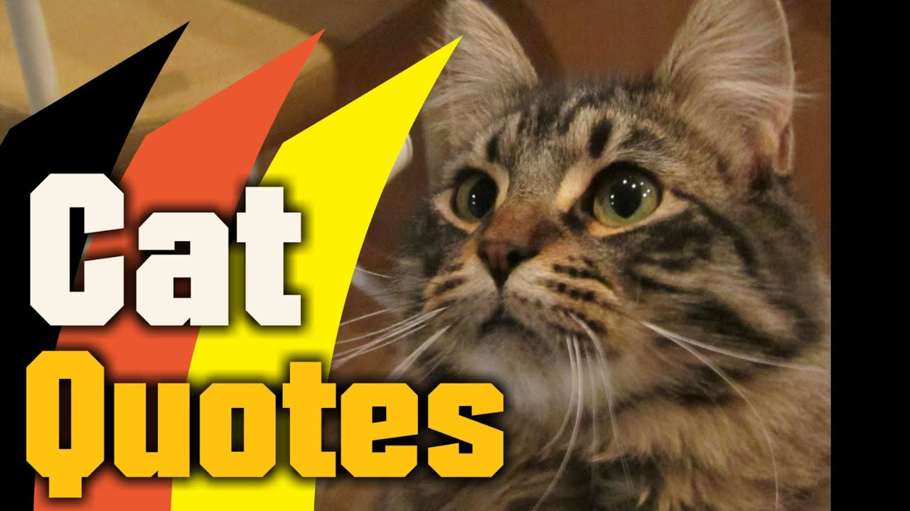 Fun Cat Quotes - Quotes About Crazy Cats - YouTube