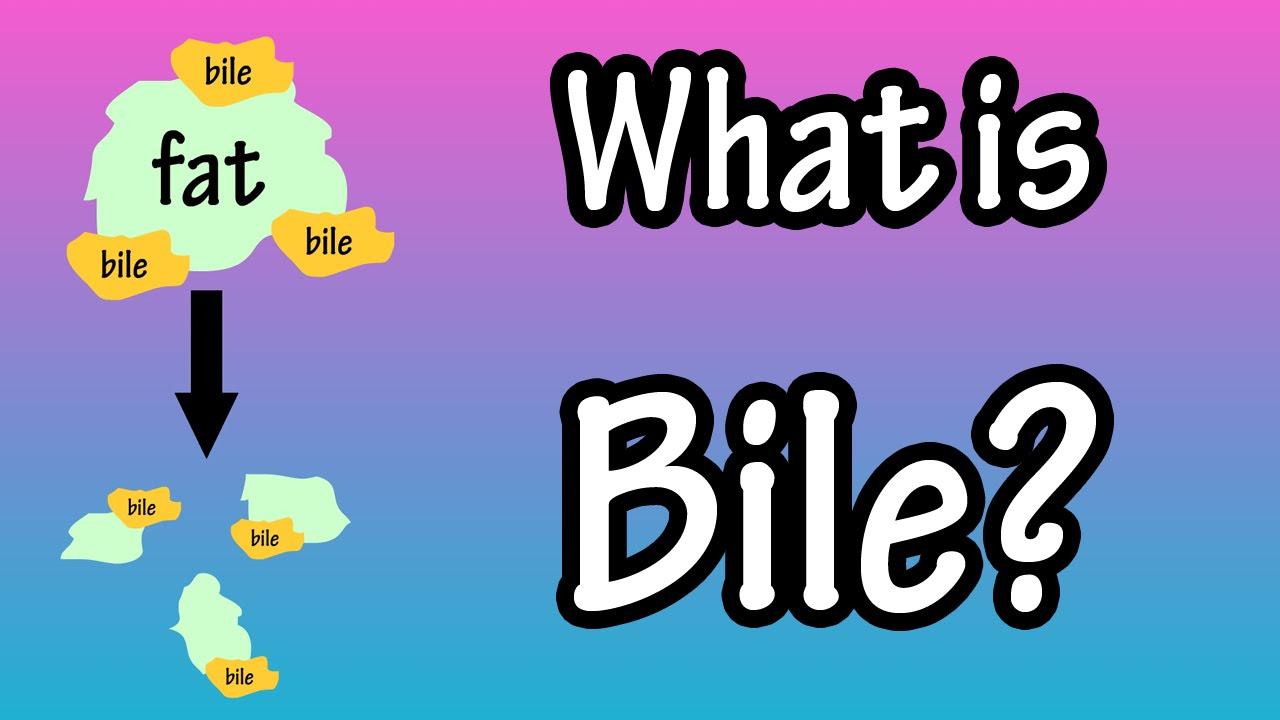 bile - what is bile? - youtube, Human Body
