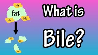 Bile - What Is Bile?