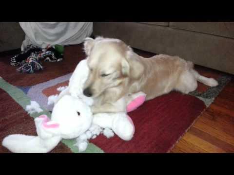 dog-ripping-out-rabbit-guts-(stuffed-animal-plush-toy)---english-cream-golden-retriever
