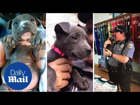 Officers rescue adorable pit bull puppy left to freeze under a bridge - Daily Mail