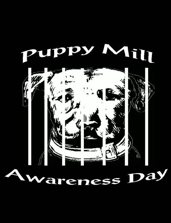Download PMAD - What is it like in a Puppy Mill?
