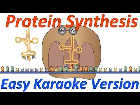 Protein Synthesis! Easy Karaoke version