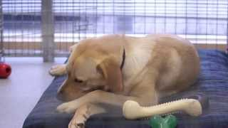 John's Journey - A Guide Dogs Legacy