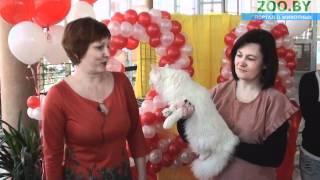 """ООЛК """"Элит -- Кис"""". Юбилейная выставка кошек «НАМ 20 ЛЕТ!»"""