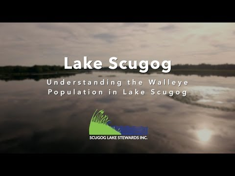 Walleye Watch - Understanding the Walleye Population in Lake Scugog