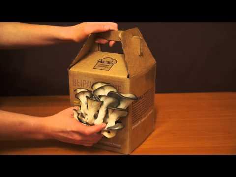 Купить набор для выращивания шампиньонов (5 наборов)