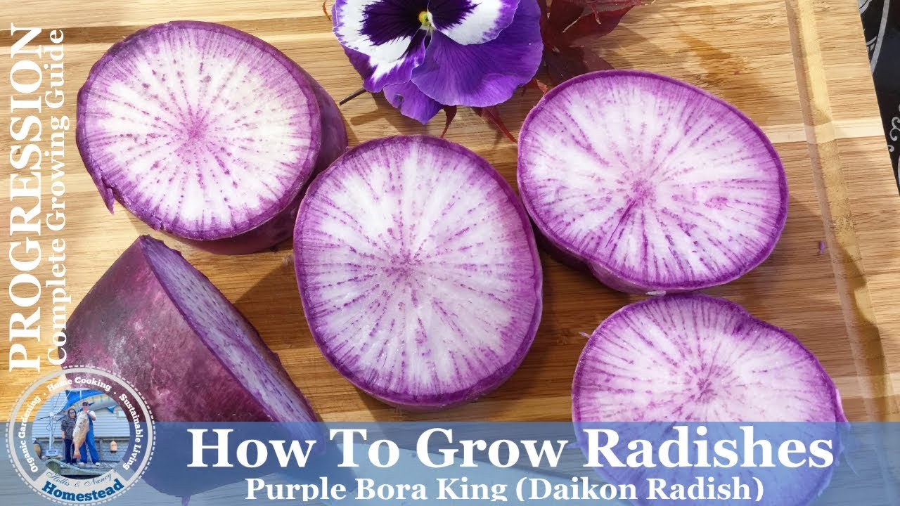 how to prepare purple daikon radish
