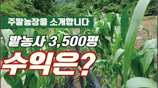 [도탈남]초보도시농부 주말농장 밭3500평, 논2300…