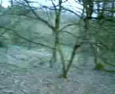 Wander through a forest