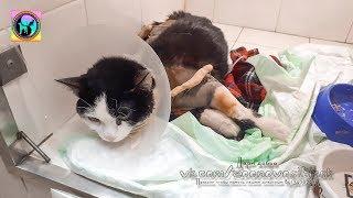 Тяжелые травмы Кот выпал с восьмого этажа потому что не было Сетки Антикошки Спасаем