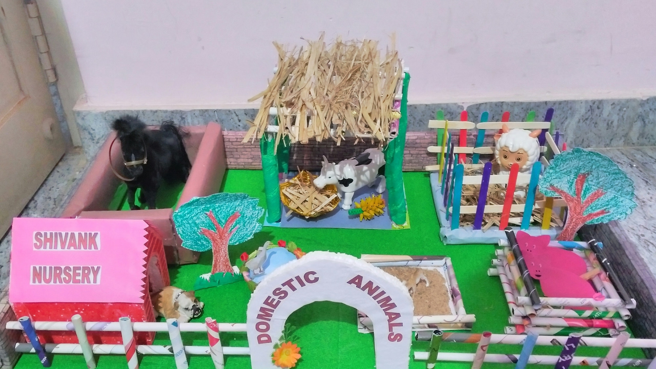 Domestic Animals Shelter School Project Youtube