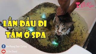 [Cô Kim] Đưa mèo đi tắm ở Pet Spa | Bathing for cats in Spa