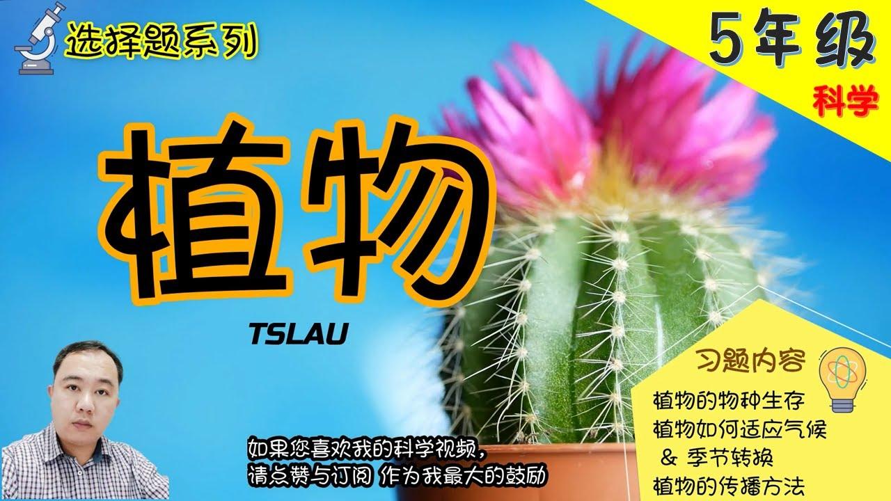【选择题系列】|【植物】5年级 | KSSR | TSLAU
