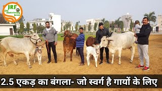 👍Best #Desi #Cows Farm Management in Rohtak, Haryana.👍 (9068630000 Joginder Sir).👍