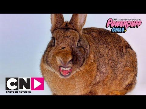 super-cute-super-fierce-bunny-|-the-powerpuff-girls-|-cartoon-network