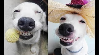 Try Not To Laugh Watching Funny Dog & Cat Vines - Funny Vines Compilation 2018 #5