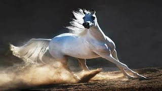 Сказочная красота  и грация лошадей в фотографиях Войтека Квятковского