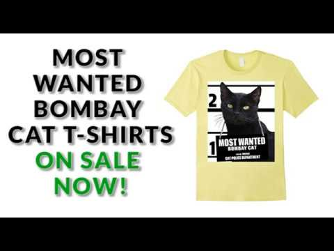 Most Wanted Bombay Cat T shirt - Men's, Women's, Kid's - White, Heather Grey, Lemon