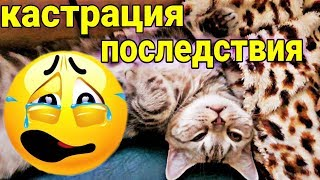 КАСТРАЦИЯ КОТА / ПОСЛЕДСТВИЯ ОПЕРАЦИИ / Castration Cat / Семья Козырь