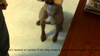 Dog Training Tutorial: Teach Your Dog To Fetch Using The Clicker Method (part 3)