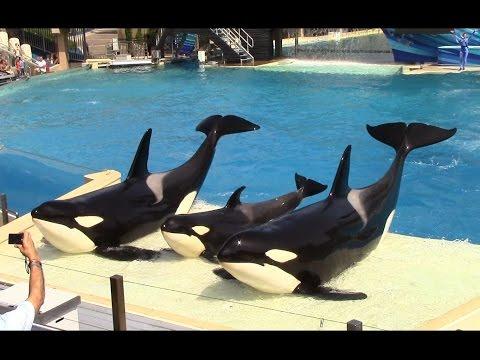 One Ocean (Full Show) SeaWorld San Diego 9/20/14