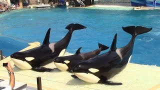 One Ocean (Full Show) SeaWorld San Diego 9/20/14