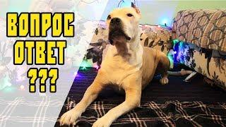вопросы о собаках | дрессировка собак
