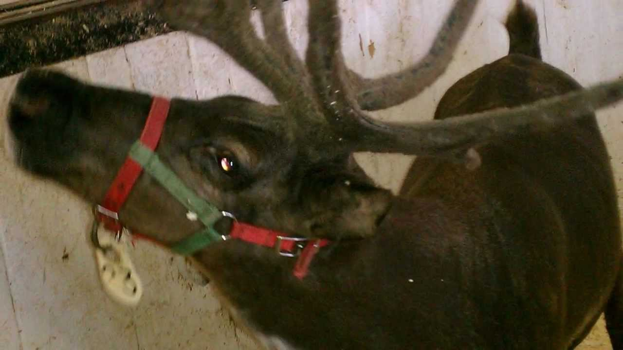 Santa Claus Reindeer. Rudolph Red Nose. - YouTube