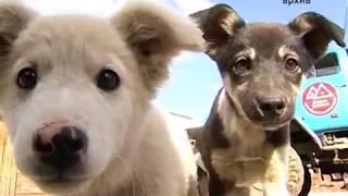 Вспышку вируса чумы у собак зафиксировали ветеринары в Биробиджане(РИА Биробиджан)
