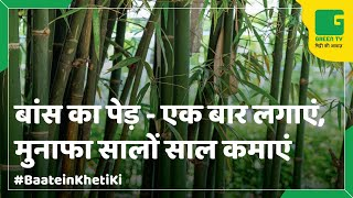 Bamboo Farming: (बांस की खेती) In Baatein Kheti Ki - On Green TV