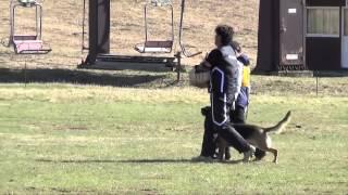 栃木県の犬の訓練所ドッグスクールピッピ 公式サイト:www.pippi-web.co...