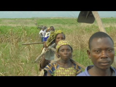 euronews reporter - DR Congo: harvesting on the ruins of war