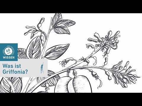Achat Griffonia Simplicifolia - déprime et dépression: traitements | Encyclopédie sur le ...