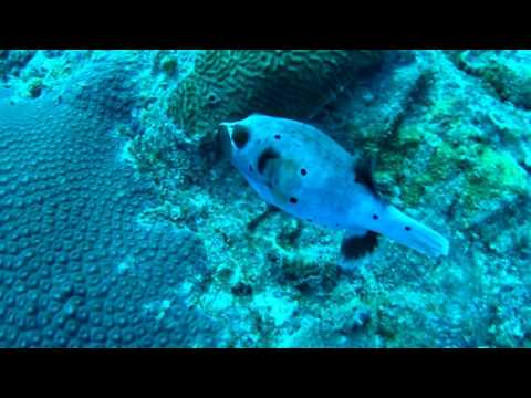 Pulau Tenggol Dive Trip May 2017