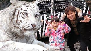 라임의 귀여운 호랑이 사자에게 간식주기! | 에버랜드 사파리 스페셜 투어 체험 LimeTube & safari tour