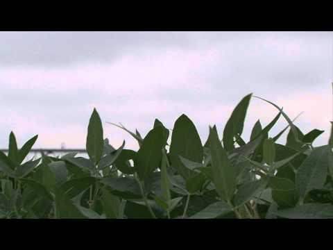 Nebraska Crop Budgets - Market Journal January 20, 2012