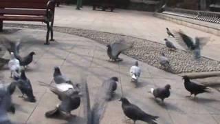 크라잉넛 - 비둘기