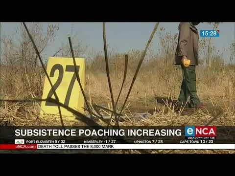 Subsistence poaching increasing