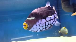 Морские рыбы в Аквариф Шоп