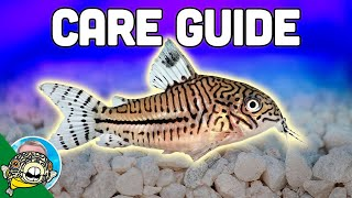 Fish Tank Fish Care Guides