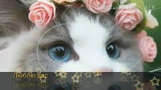 Самые милые фото котят!