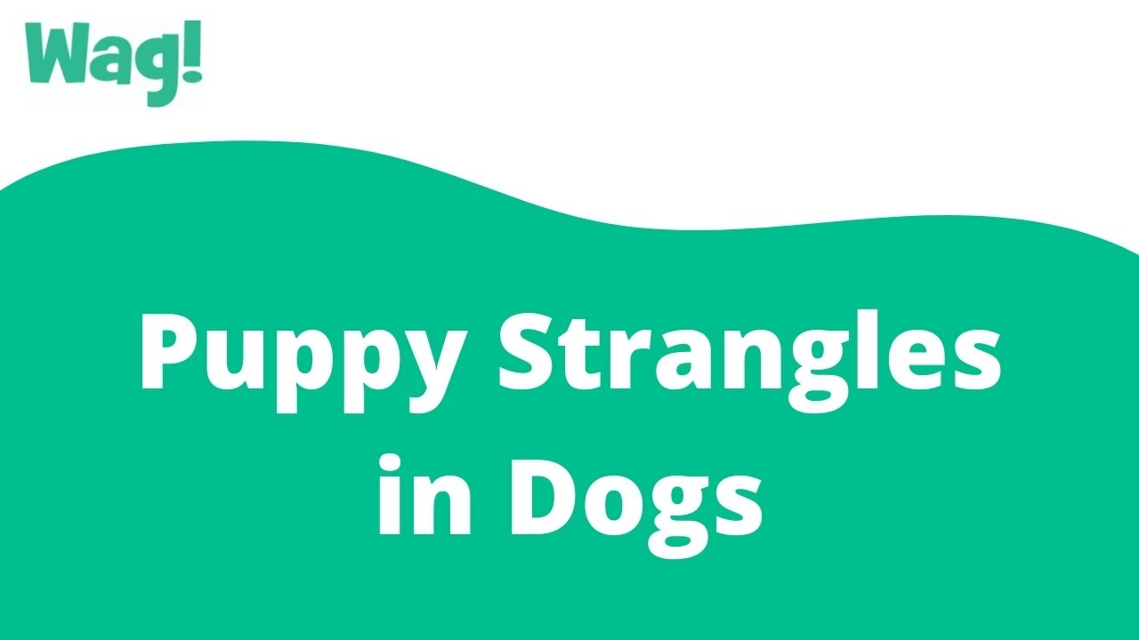 Of strangle stages puppy What causes