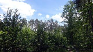 Лес Грибы Природа Грибная Охота Отдых