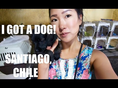 RESCUING DOGS IN SANTIAGO, CHILE!