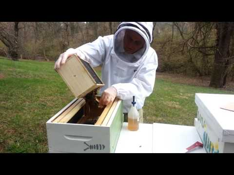 installing my first package of bees