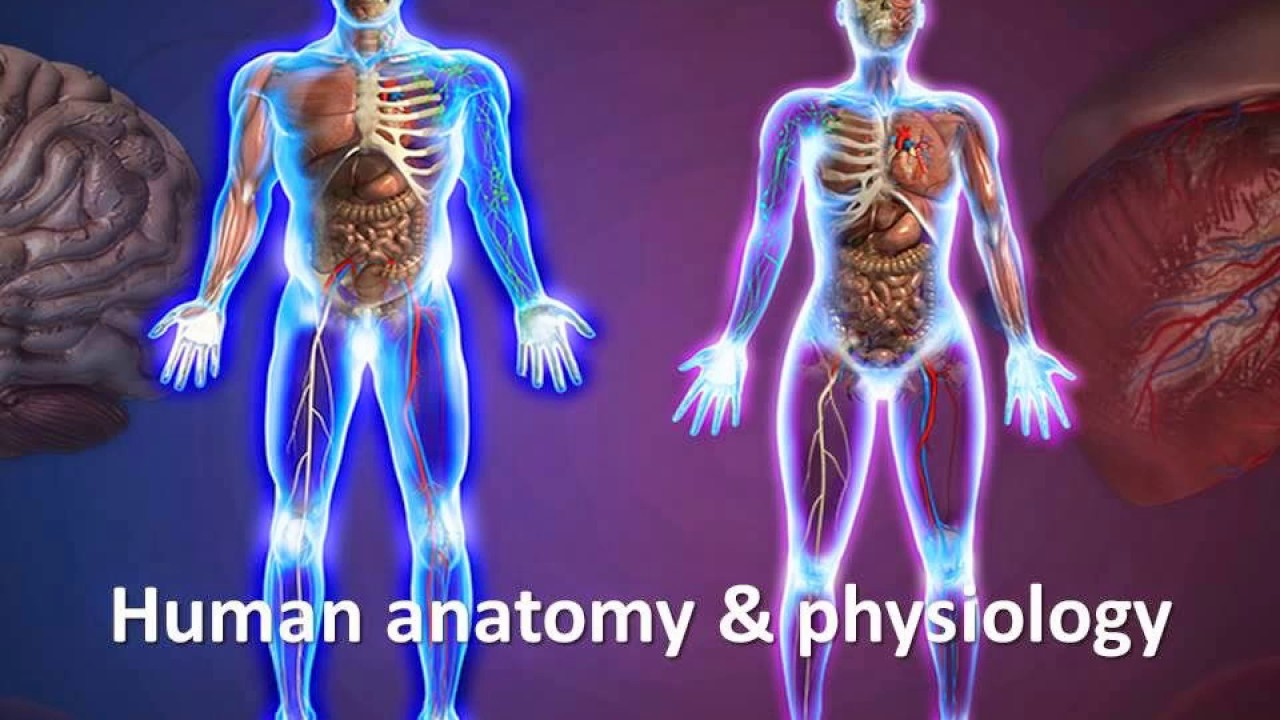 Human Anatomy And Physiology Course Online By Dr James Ross - YouTube